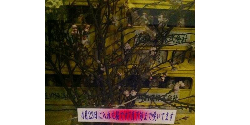 sake_g_tamagawasyuzou4 (1)