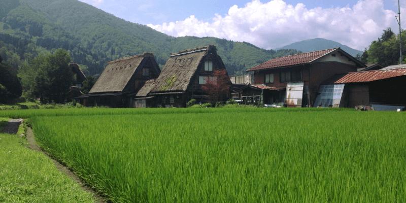 sake_minokiku_1 (1)