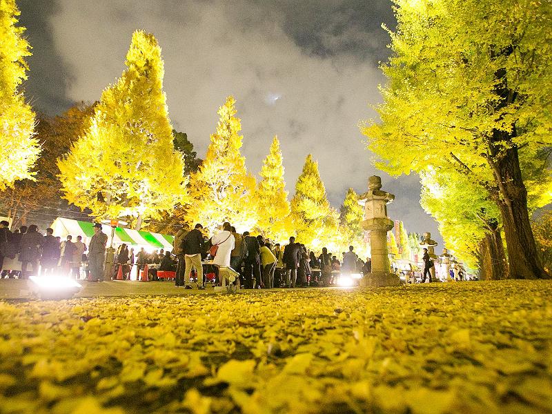 紅葉が美しく色づく秋。見渡す限り、赤や黄色に色づいた木々の景色をながめながら、熟成されたひやおろしを飲むのも季節の楽しみ方のひとつです。四季豊かな日本を感じながら、ひやおろしに代表される季節の日本酒を楽しみたいですね。