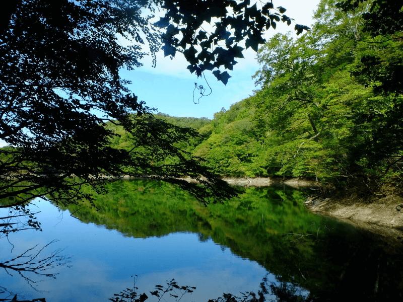 sake_shirataki-dokara_1