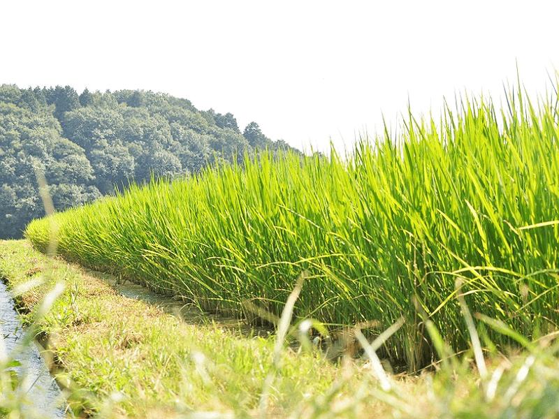 sake_g_sen_04