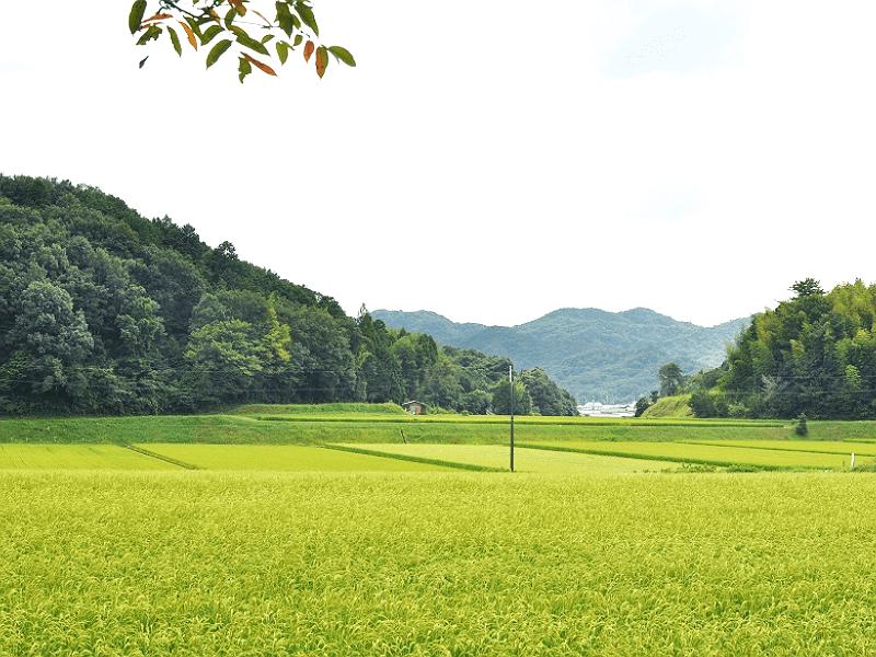 sake_g_sen_05