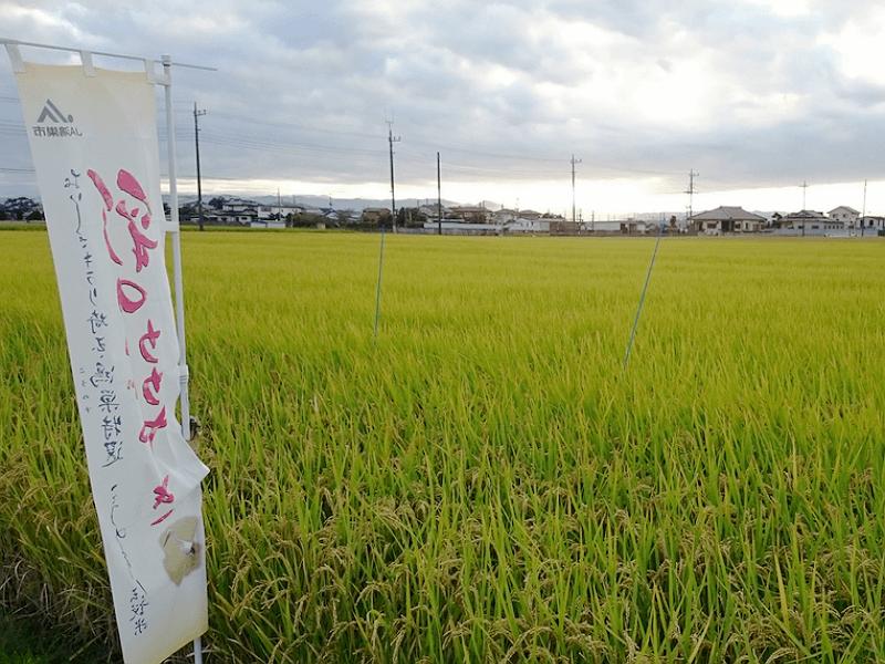 pr_saitama-sake-derby_2016_2