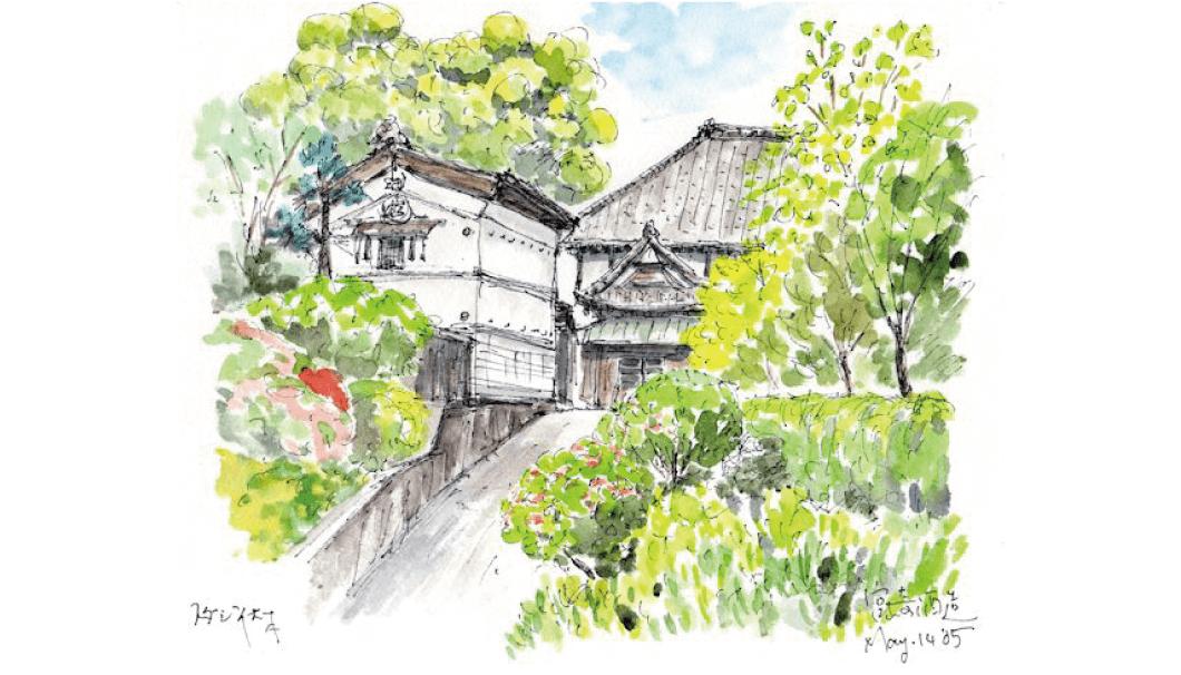 スダジイという樹齢1000年を超える木がある宮崎酒造(千葉県)