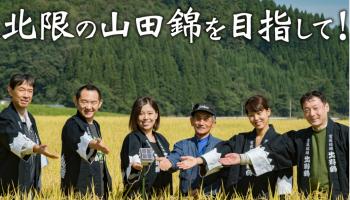 秋田県ではほとんど栽培されていない「北限の山田錦」の栽培を目指すプロジェクト