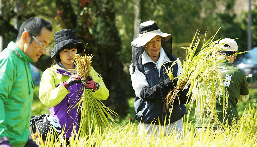 上新城ノーザンビレッジ・稲刈りの風景