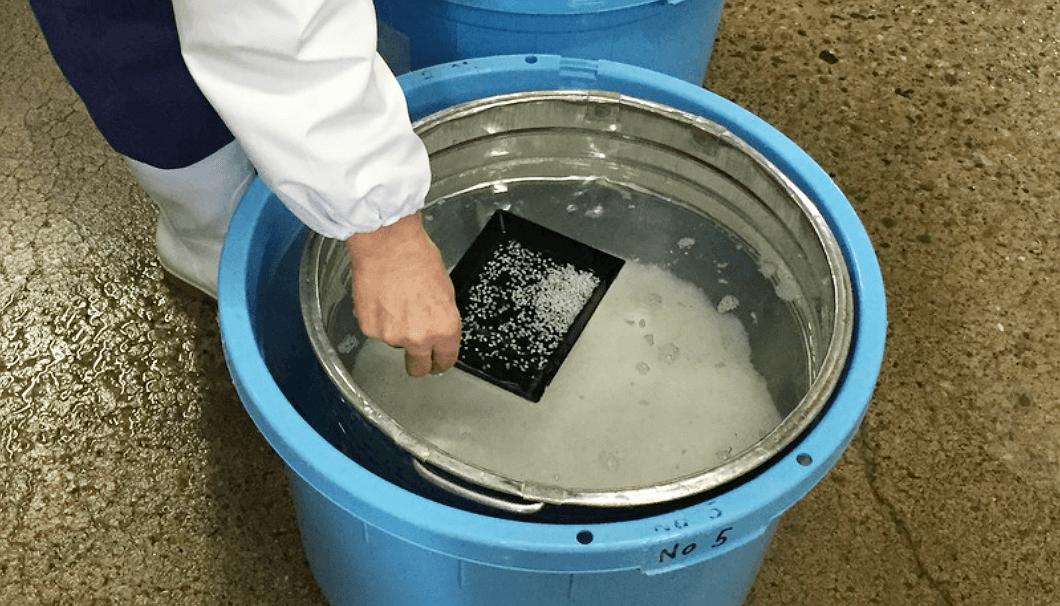 ザルを使った洗米作業
