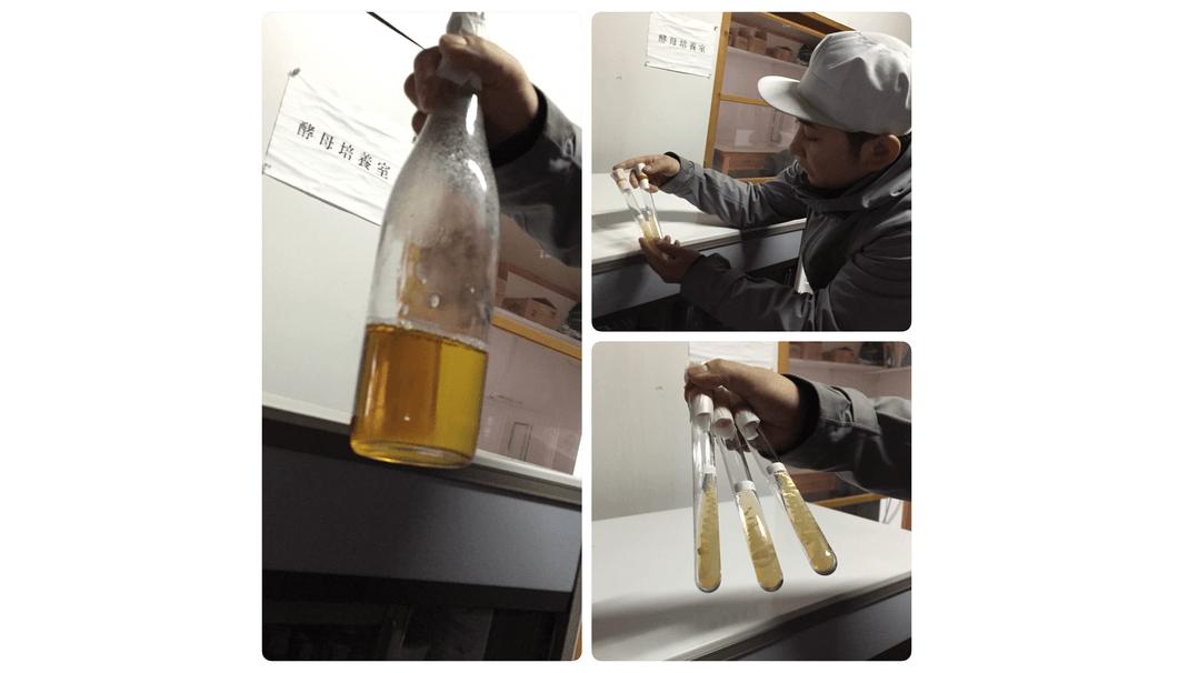 笹祝酒造の自社培養酵母