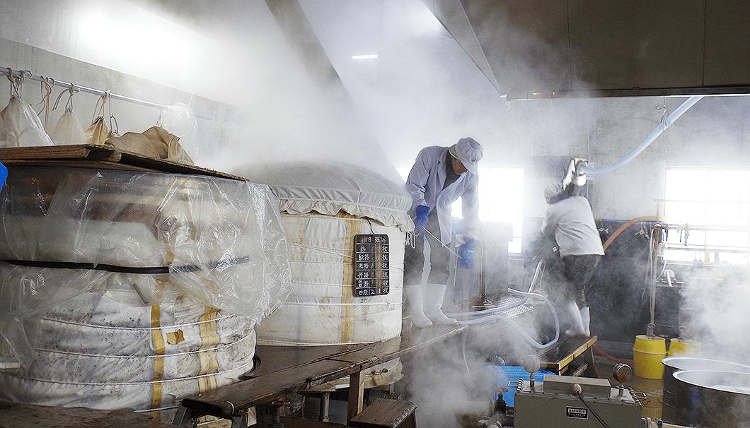 「山恵錦」の蒸きょう作業