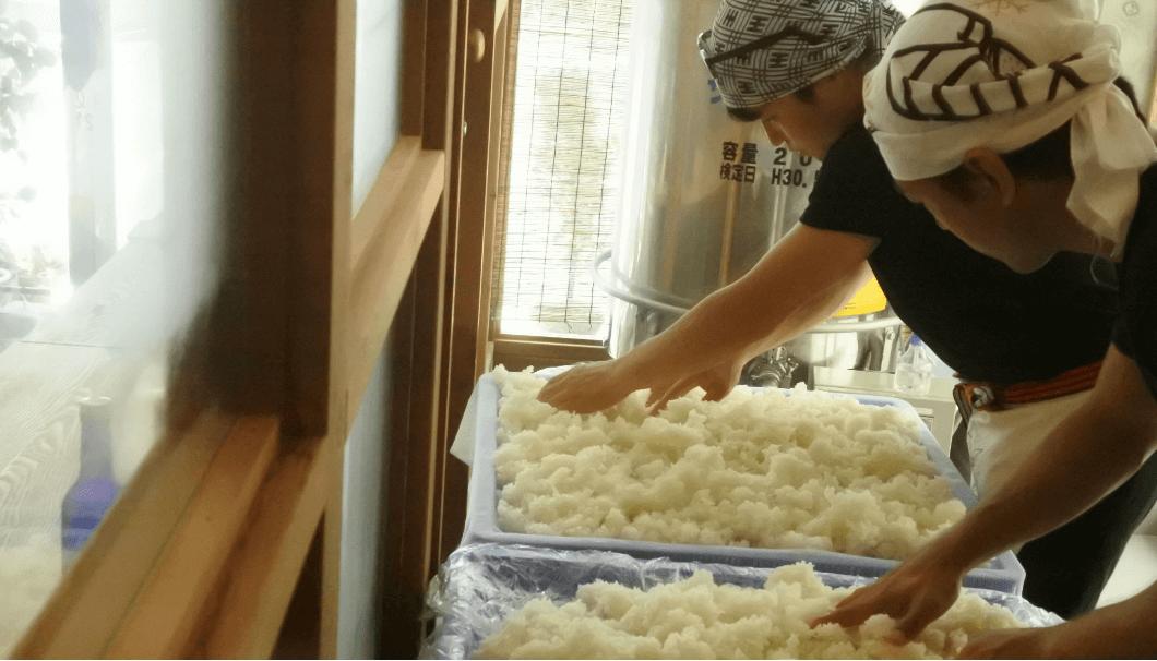 蔵人を蒸米を前に作業している様子