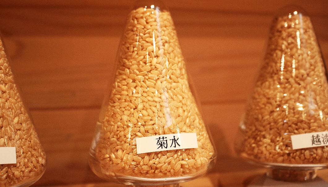 菊水酒造が育てる酒米「菊水」