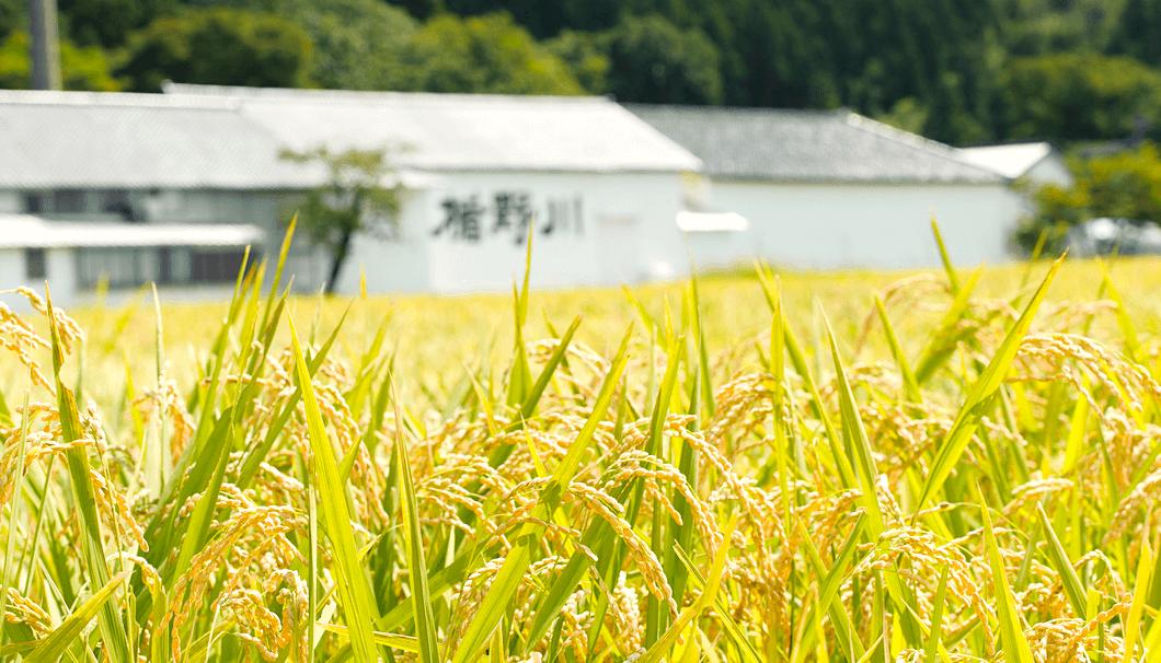 庄内の田園風景