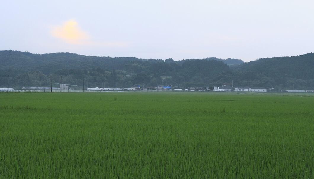 庄内の豊かな土壌からは、高品質な米や農産物が生まれる