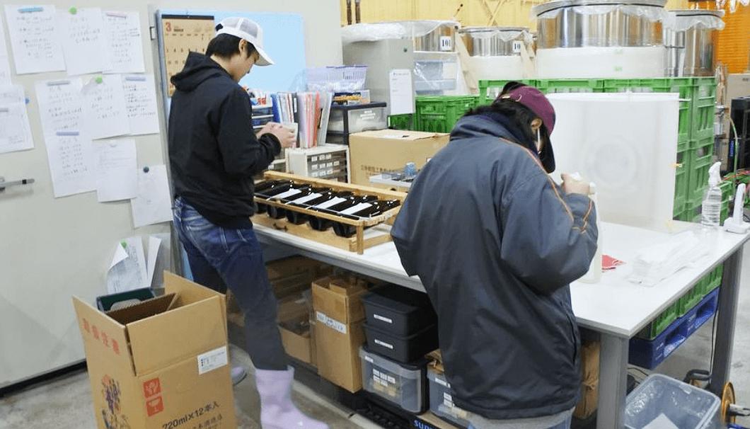 仮設蔵での出荷作業
