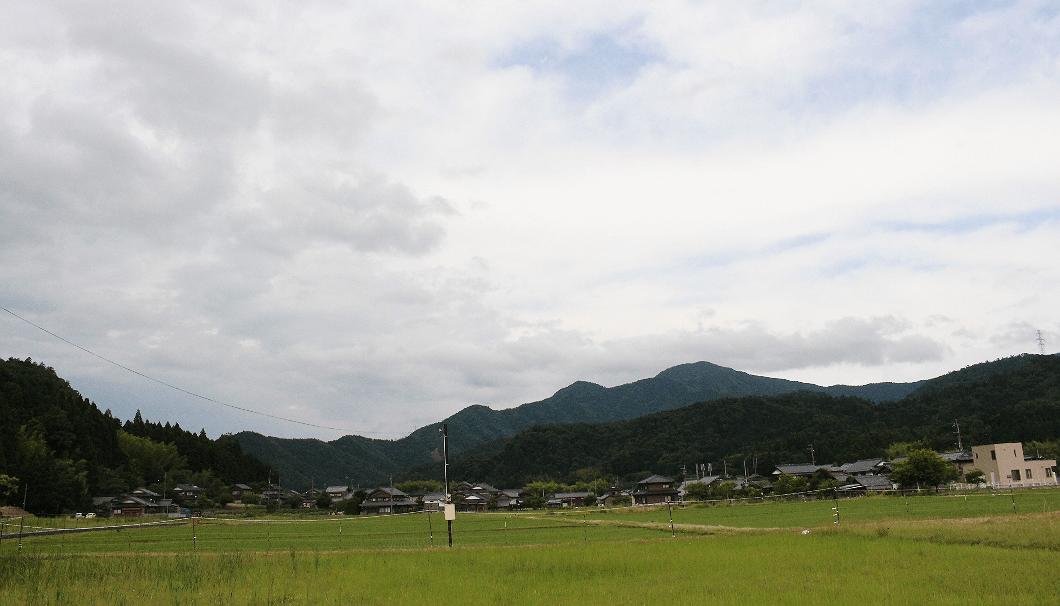 小浜酒造近隣の水田の風景