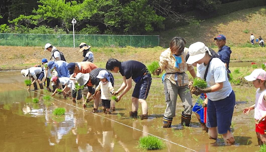 「まがり家フェスタ」での田植え体験の様子