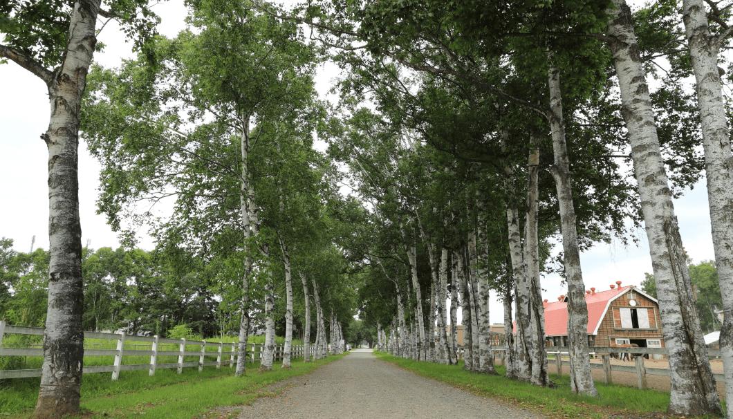 並木道の写真