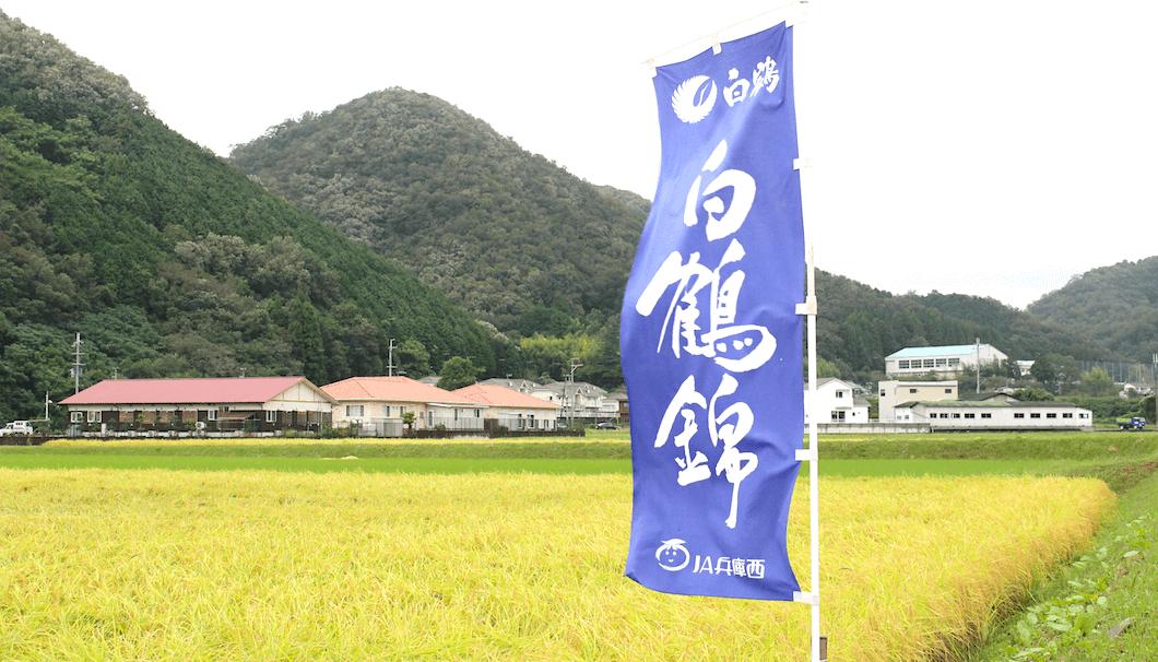 白鶴錦の田んぼ