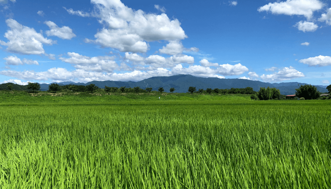 新発田の田圃
