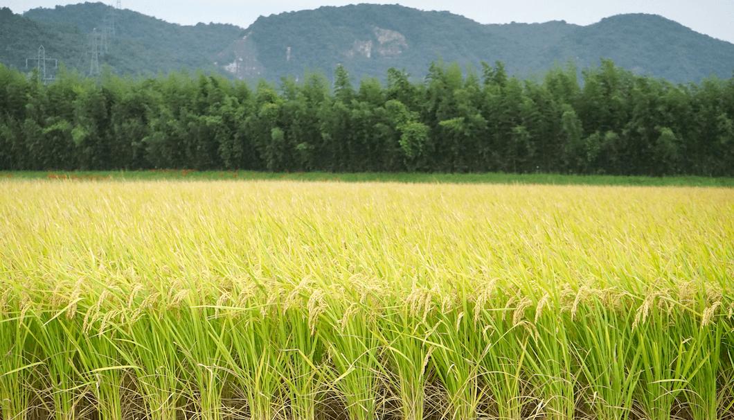 X03の酒米の田んぼ