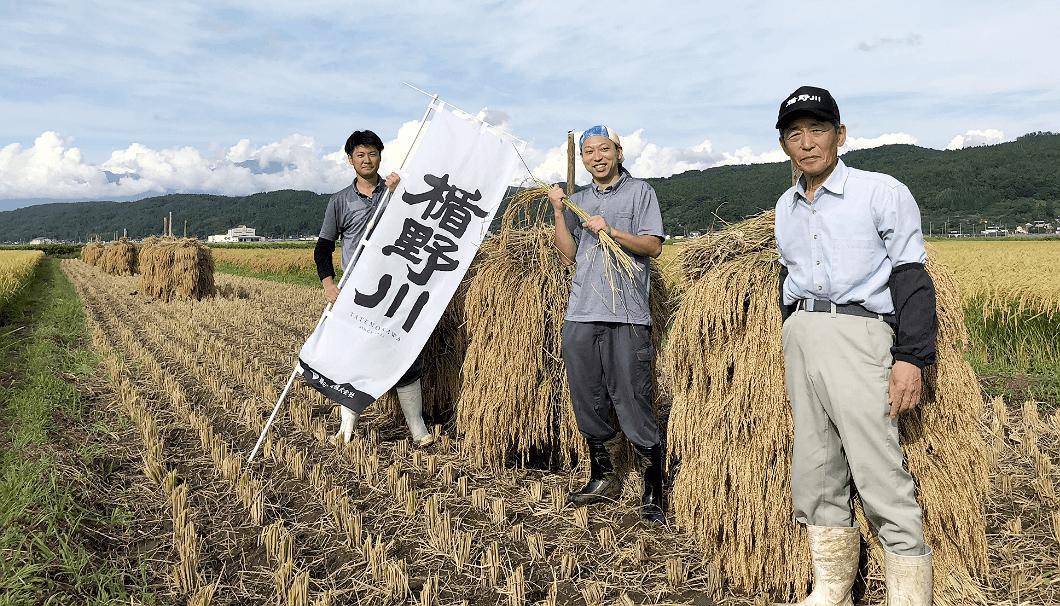 縦の川酒造も参加した稲刈りの様子