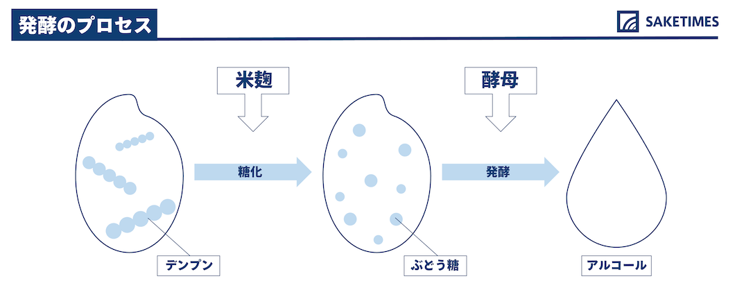 発酵のプロセス 並行複発酵が特徴的