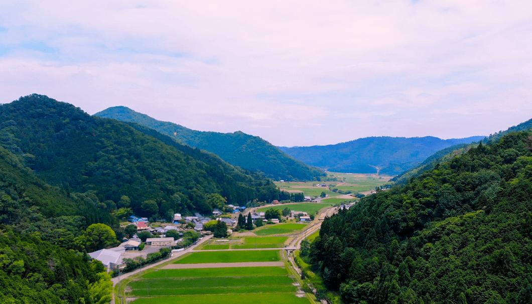 兵庫県・丹波篠山市の水田風景