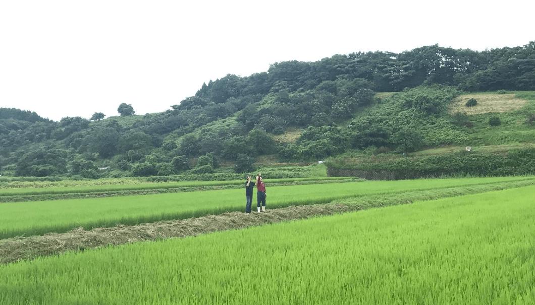 鳥取の田んぼ