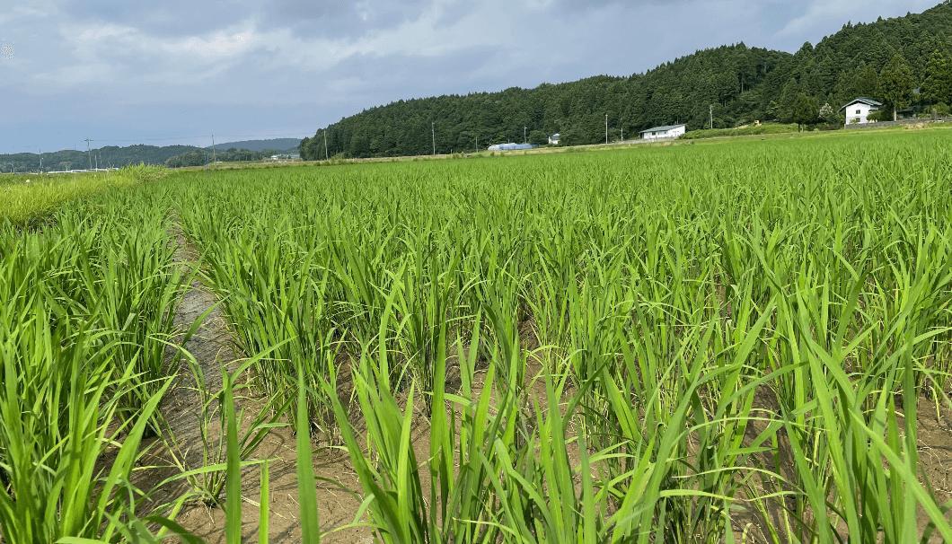 「石川酒30号再生プロジェクト」