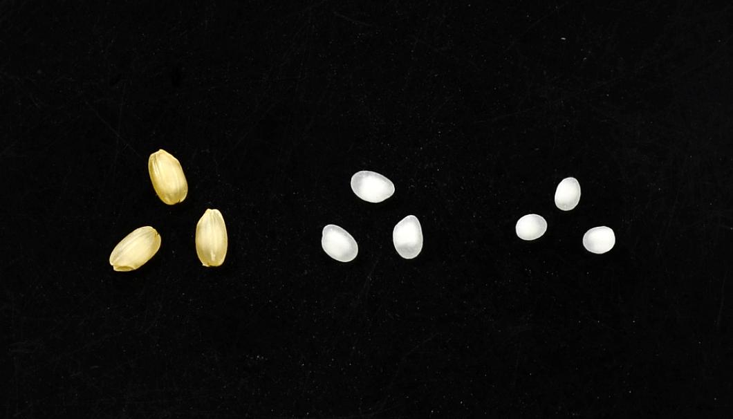 山田錦(左から順に、玄米、精米歩合70%、精米歩合38%)
